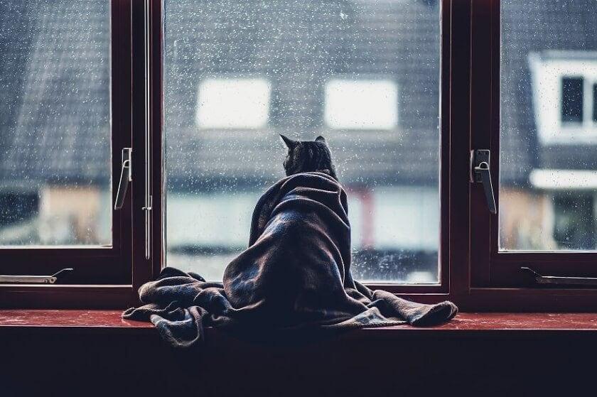 felicity berkleef cat 1