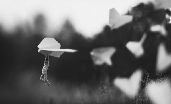 fly by fiddle oak