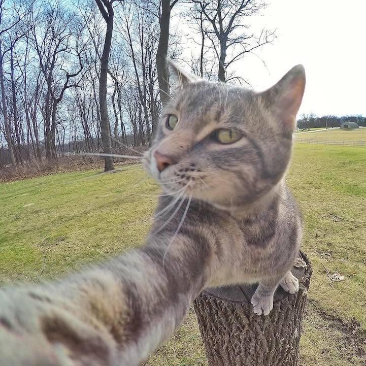 manny selfie cat fy 2