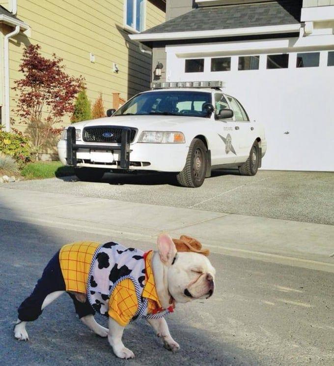 sherif 01