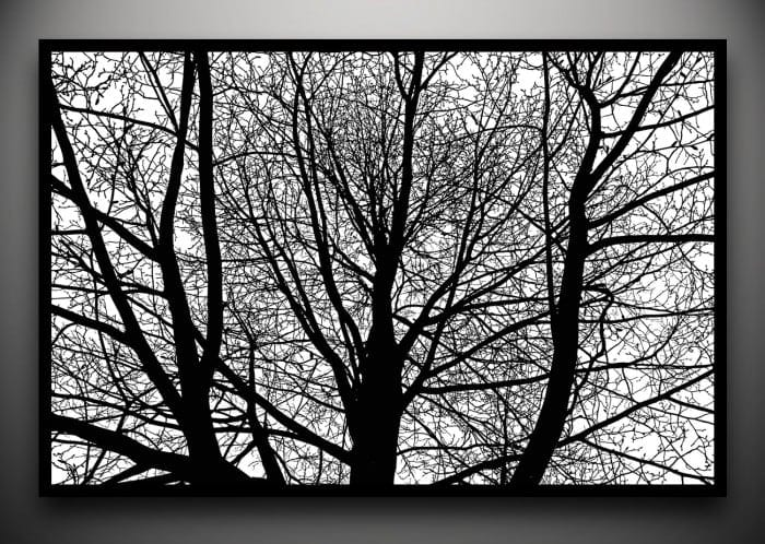 trees joe