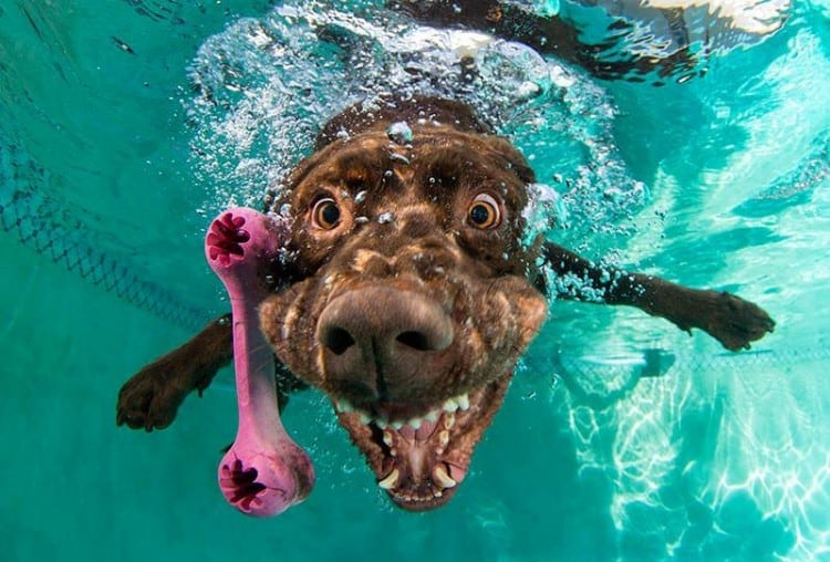 underwater photos of dogs fetching their balls by seth casteel 7