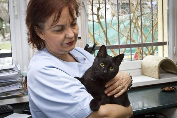veterinary nurse cat hugs shelter animals radamenes bydgoszcz poland 2