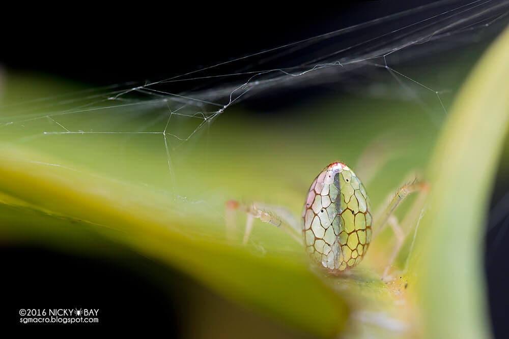 mirror-spider-5