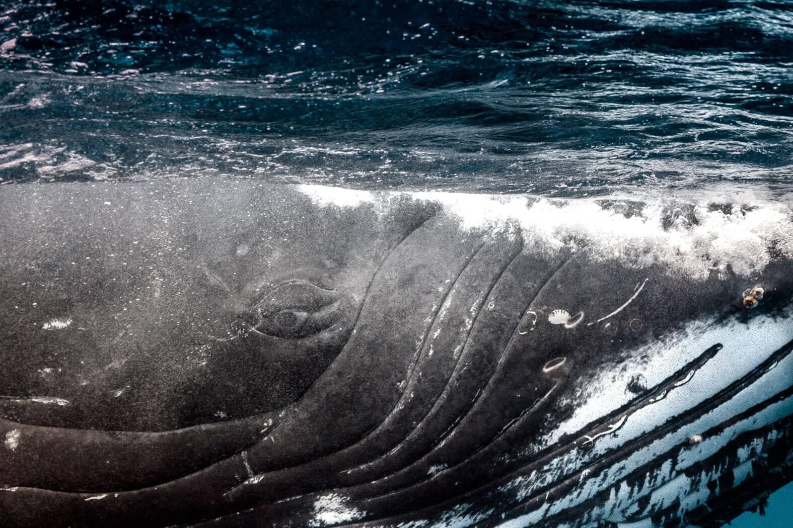 newbornwhales2