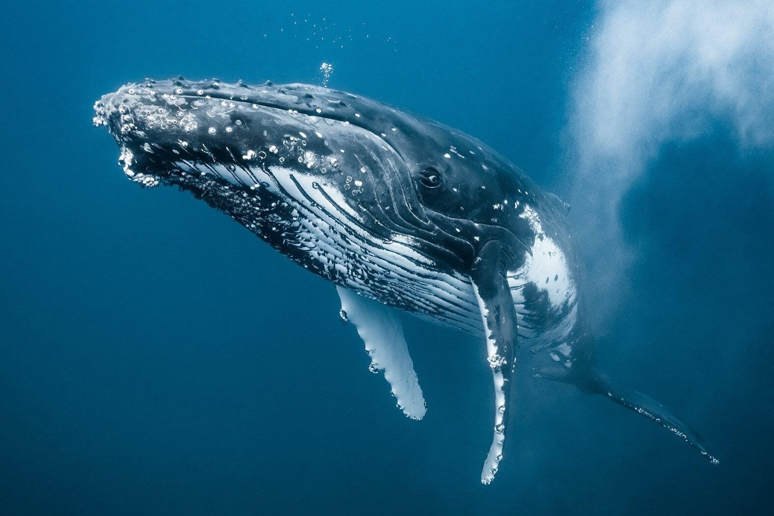 newbornwhales5