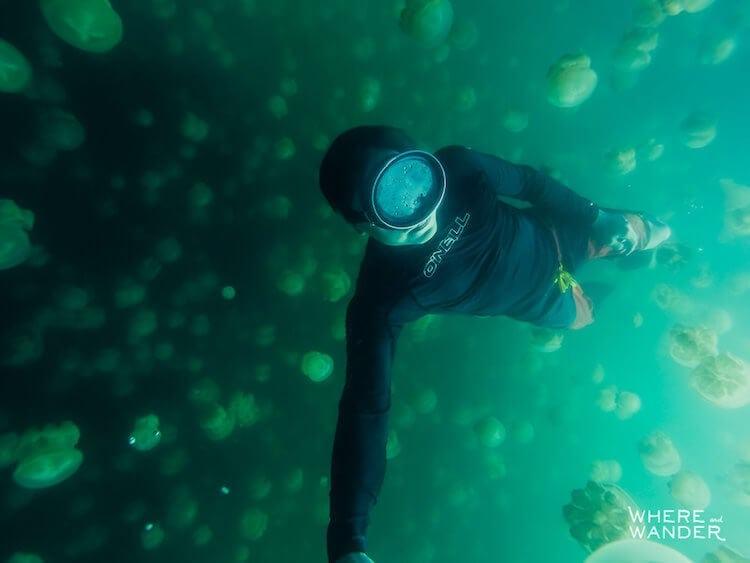 jellyfish-lake-kien-lam-6