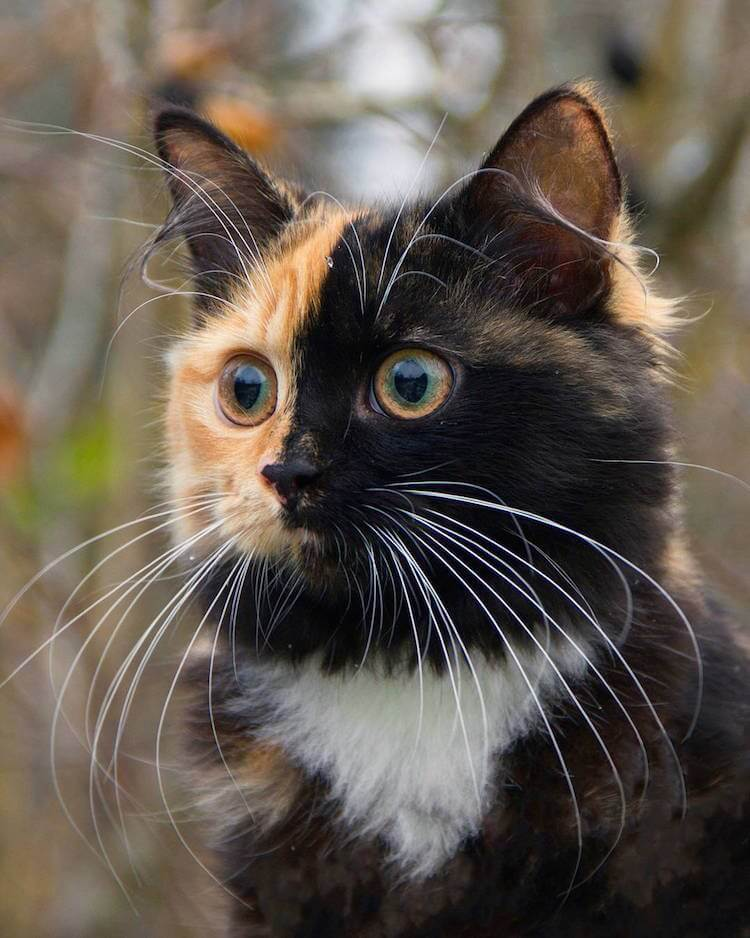 ana two faced cat 10