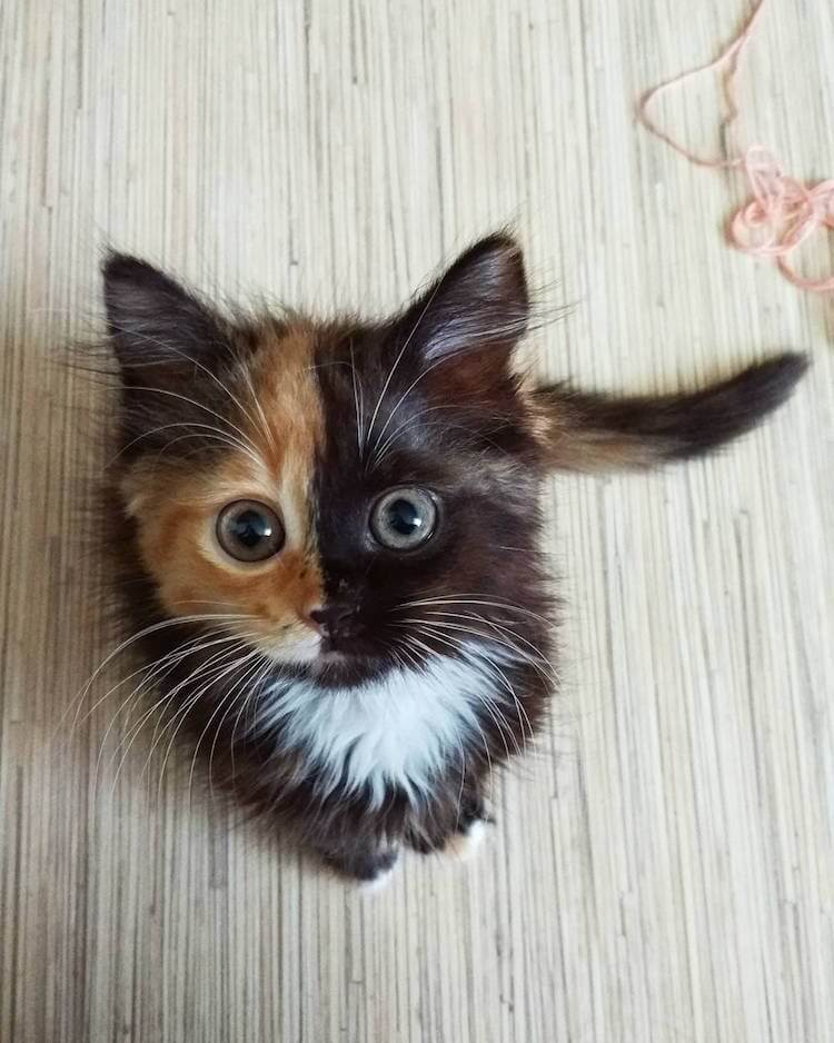 ana two faced cat 2