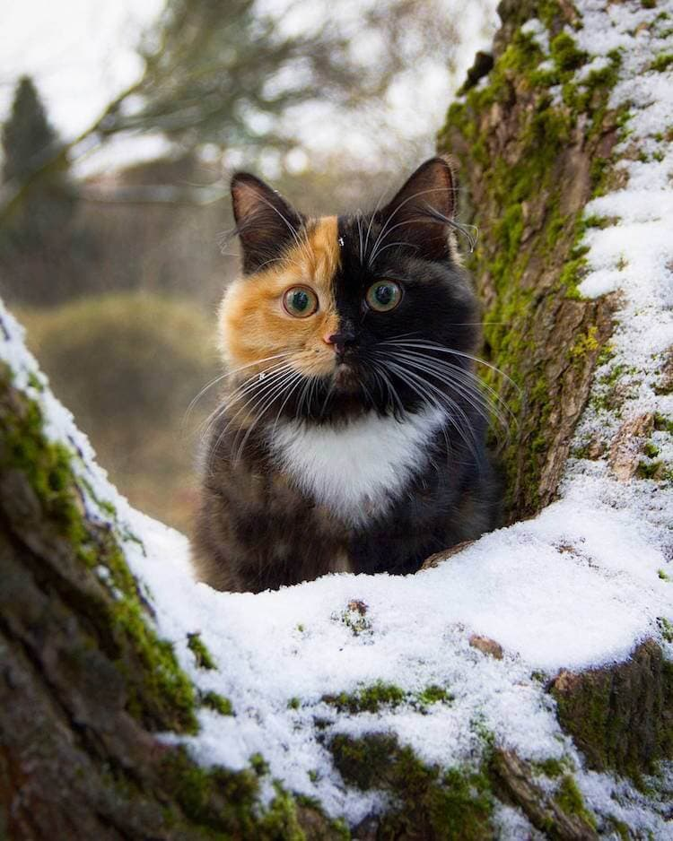 ana two faced cat 9