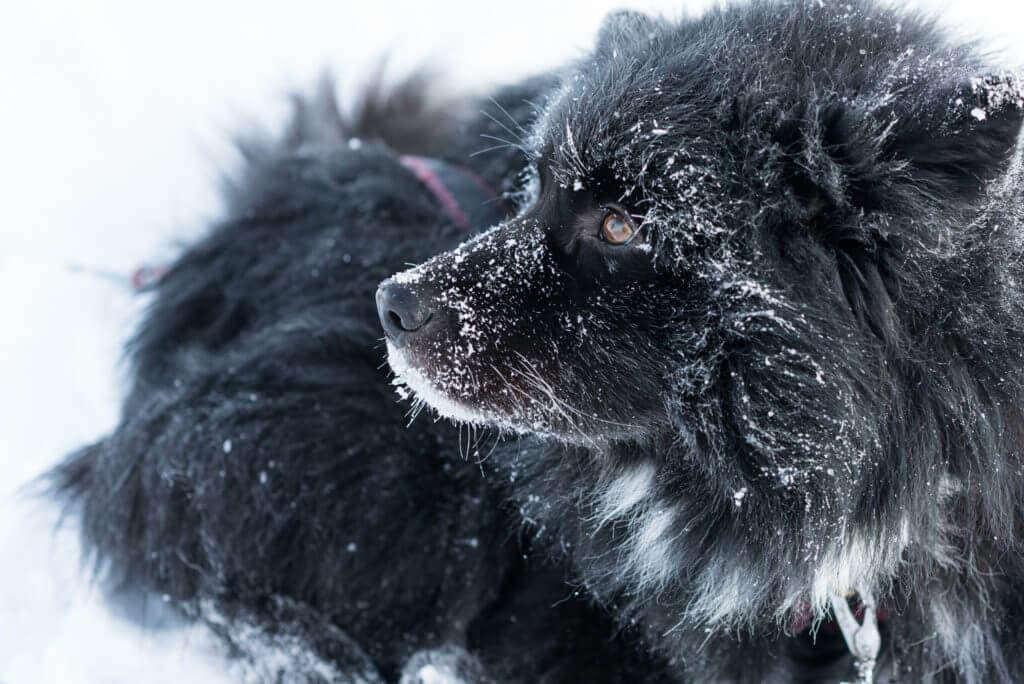 yuichi yokota finland winter 18