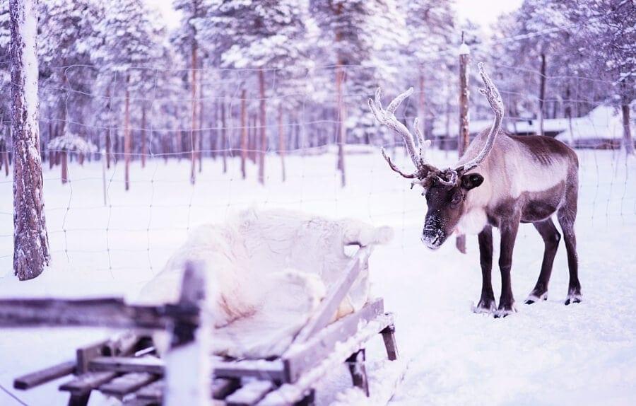 yuichi yokota finland winter 3