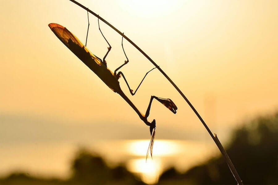 world wildlife day photography competition finalists 10