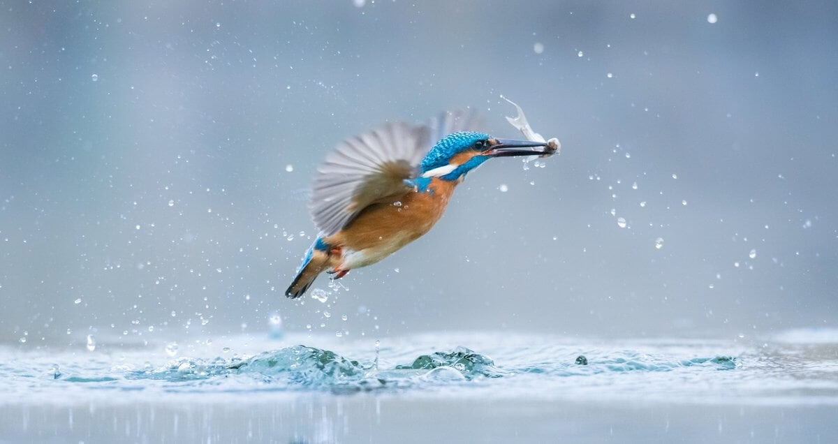 world wildlife day photography competition finalists main