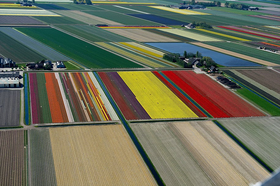 flower fields aerial photography netherlands normann szkop 12