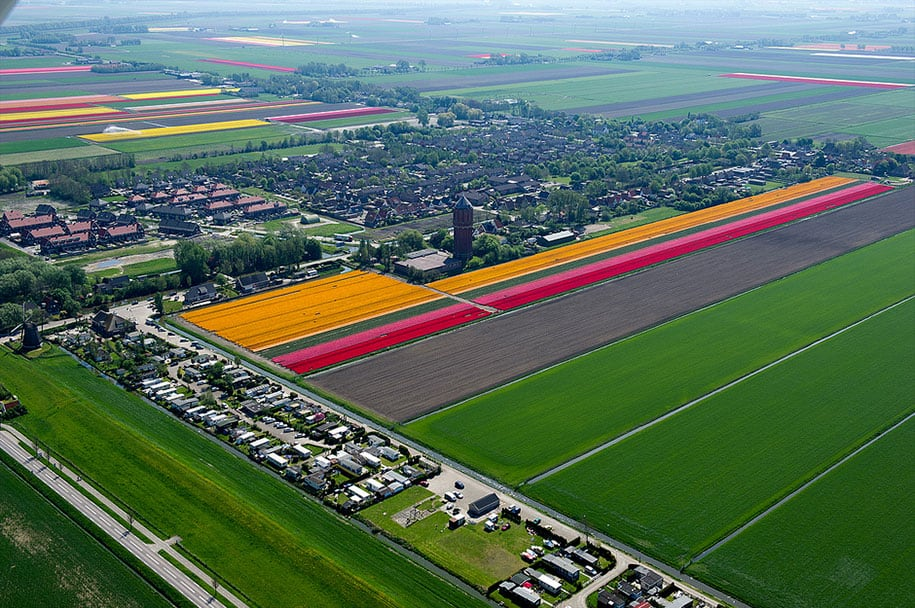 flower fields aerial photography netherlands normann szkop 13