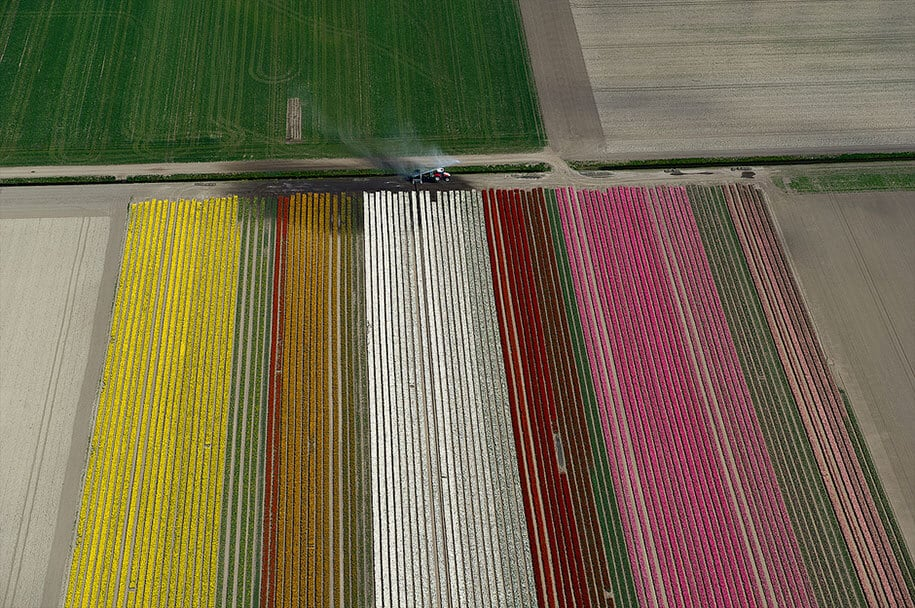 flower fields aerial photography netherlands normann szkop 15