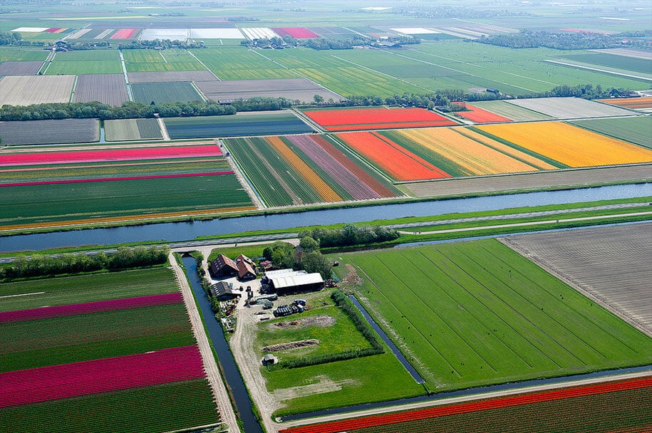 flower fields aerial photography netherlands normann szkop 18