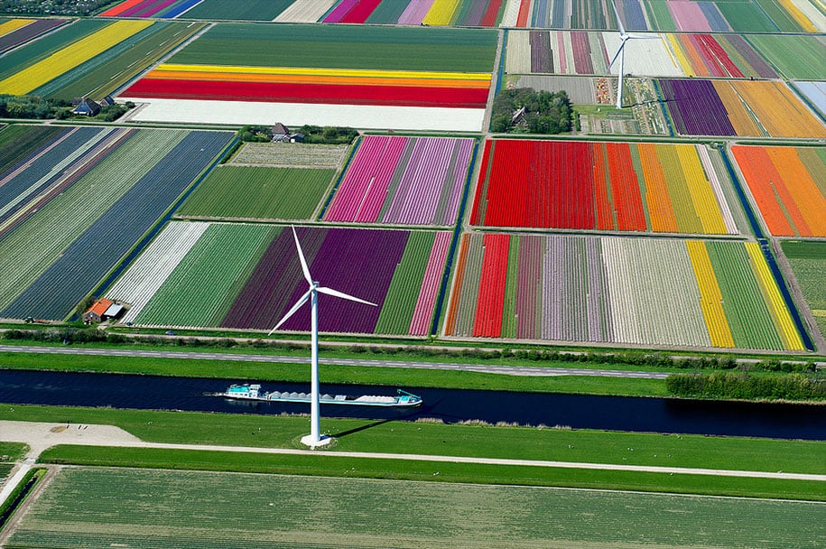 flower fields aerial photography netherlands normann szkop 19