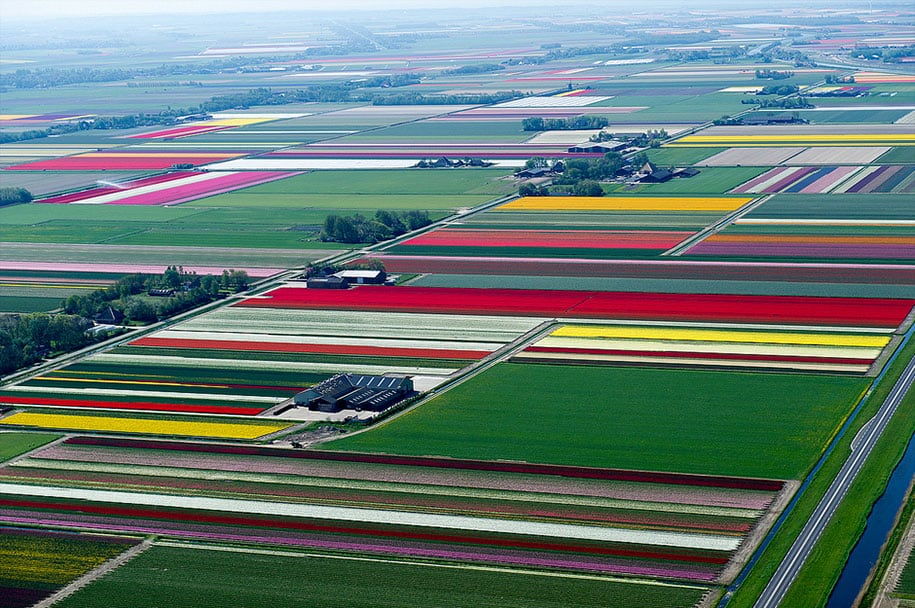 flower fields aerial photography netherlands normann szkop 22