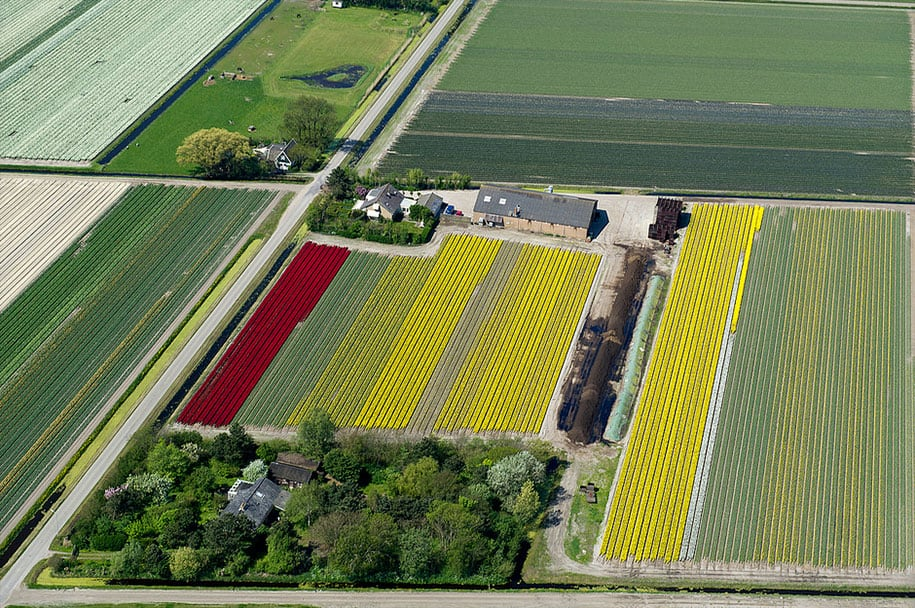flower fields aerial photography netherlands normann szkop 23