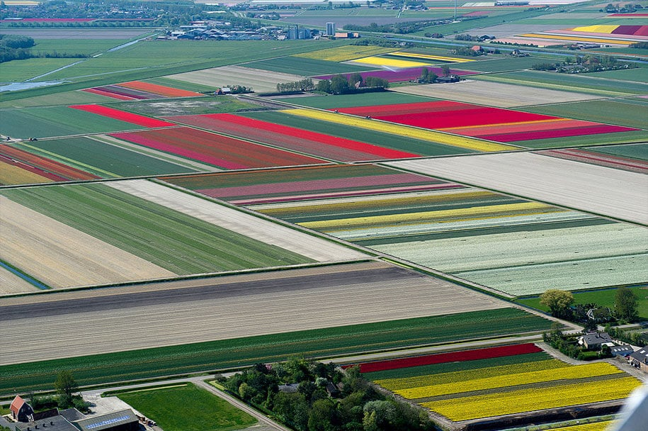 flower fields aerial photography netherlands normann szkop 24