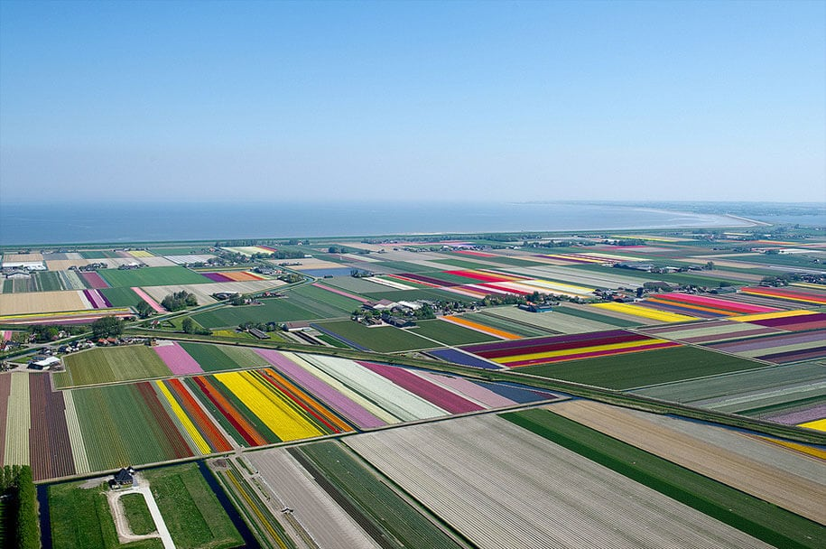 flower fields aerial photography netherlands normann szkop 25