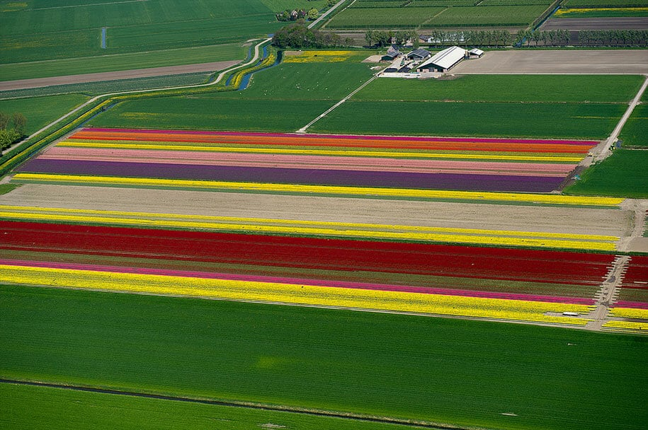flower fields aerial photography netherlands normann szkop 26