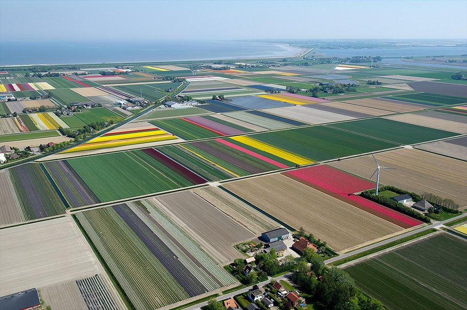 flower fields aerial photography netherlands normann szkop 28
