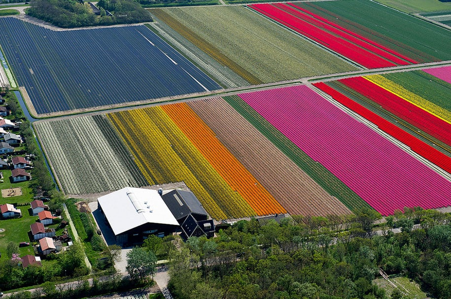 flower fields aerial photography netherlands normann szkop 4