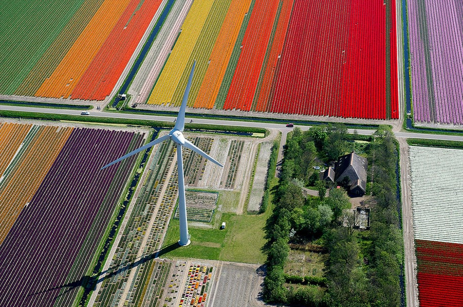 flower fields aerial photography netherlands normann szkop 5