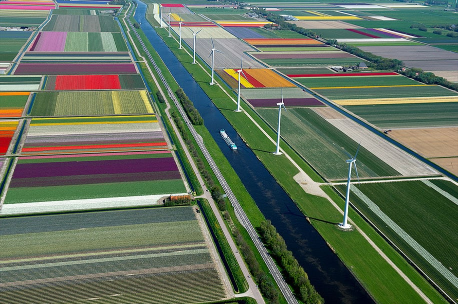 flower fields aerial photography netherlands normann szkop 7