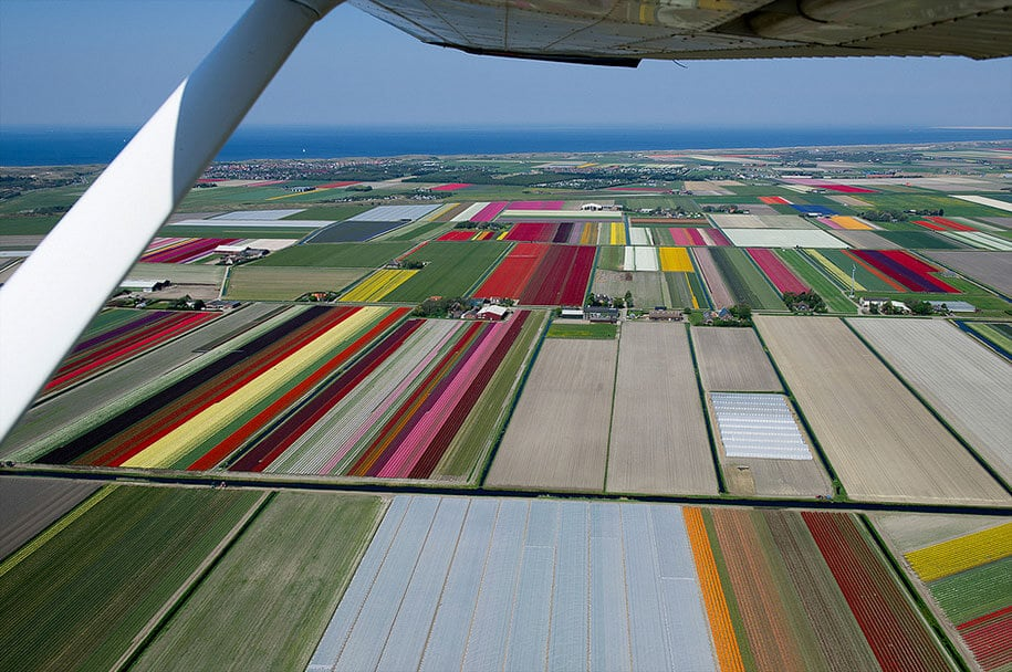 flower fields aerial photography netherlands normann szkop 9