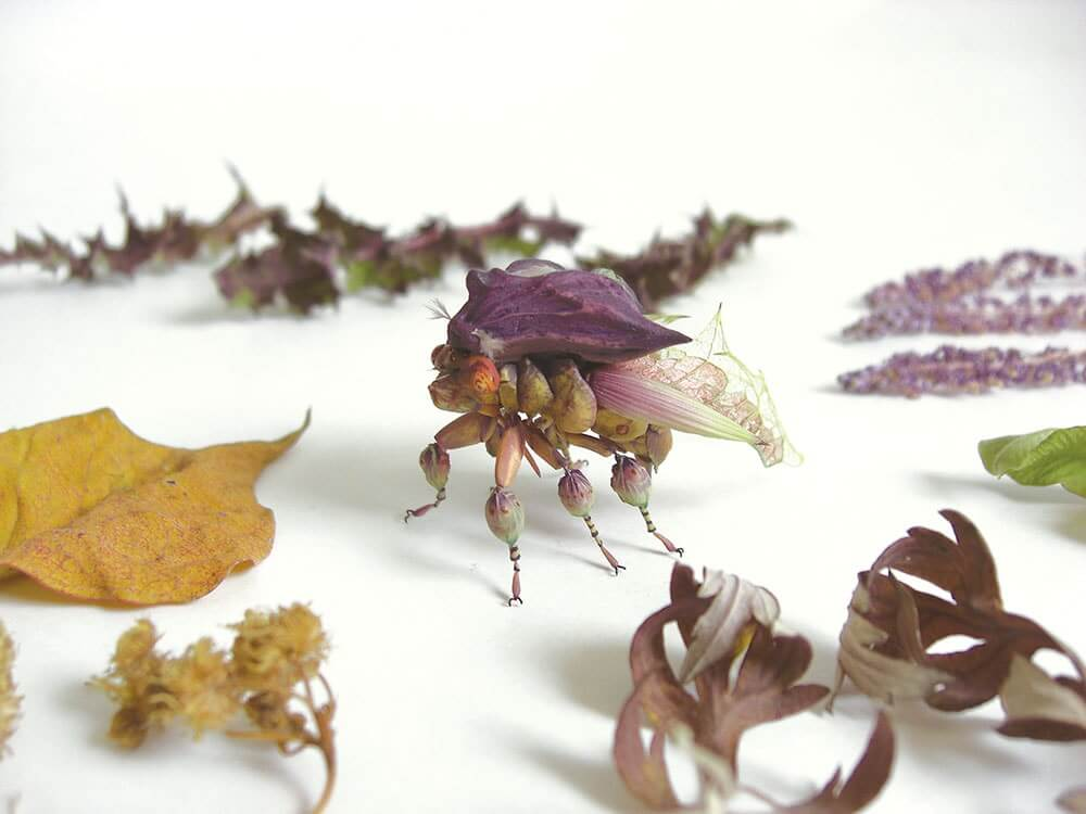 insects by hiroshi shinno 5