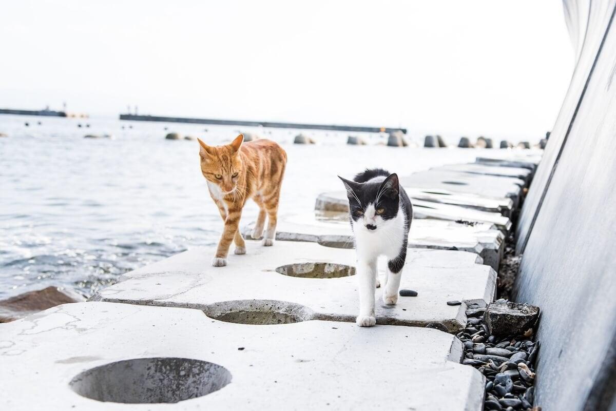 andrew marttila cats island japan 1