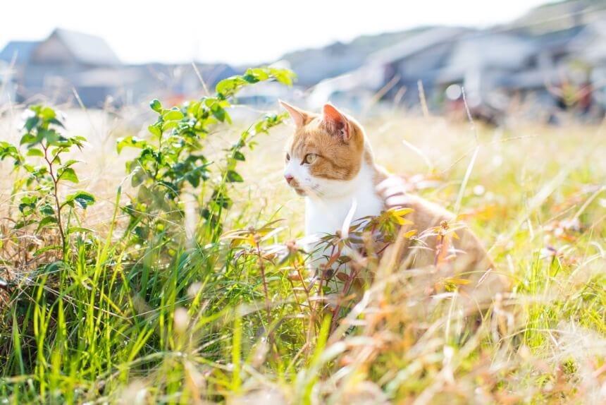 andrew marttila cats island japan 10