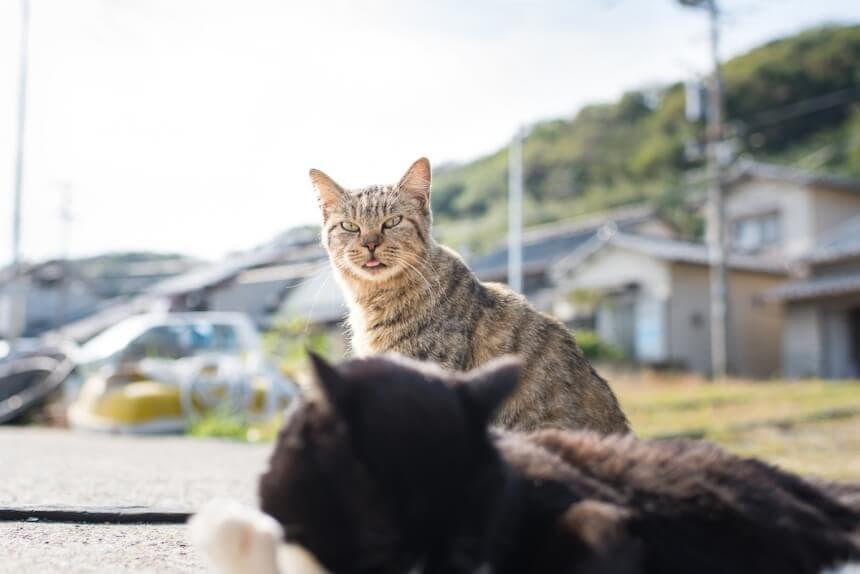 andrew marttila cats island japan 11