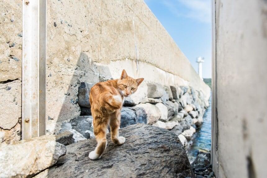 andrew marttila cats island japan 2