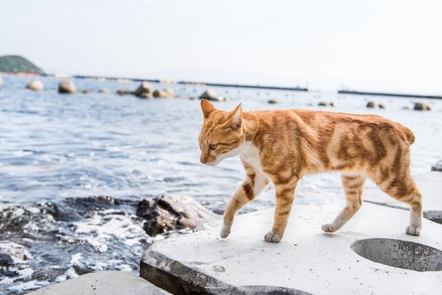 andrew marttila cats island japan 3