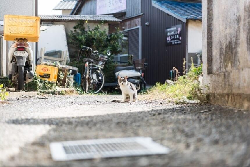 andrew marttila cats island japan 4