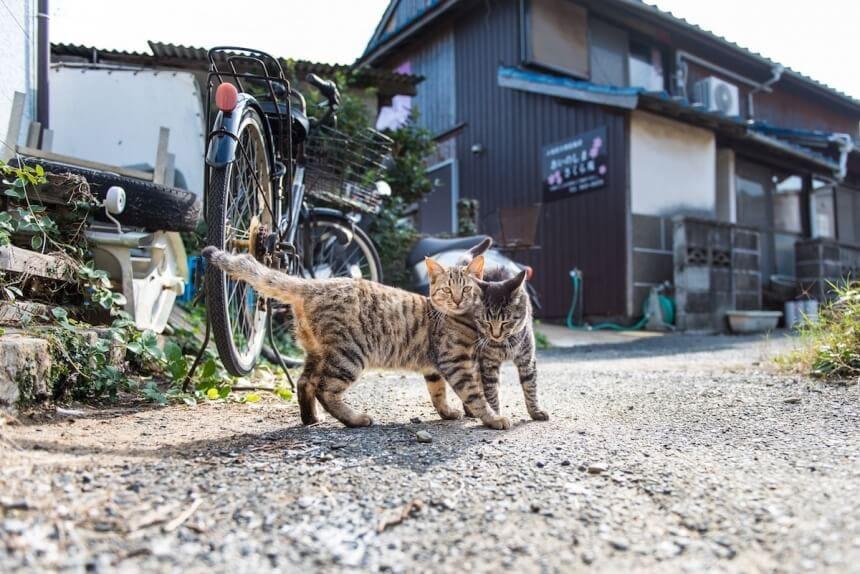 andrew marttila cats island japan 5
