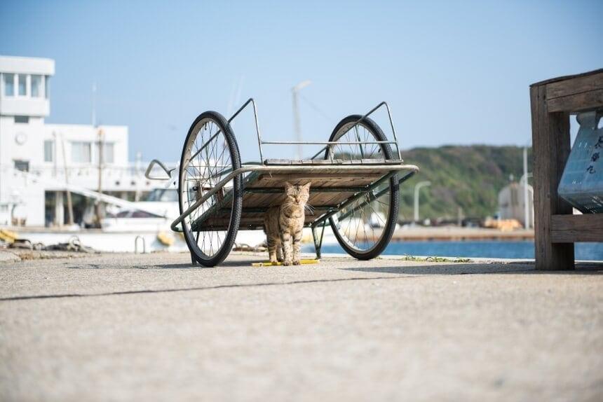 andrew marttila cats island japan 6