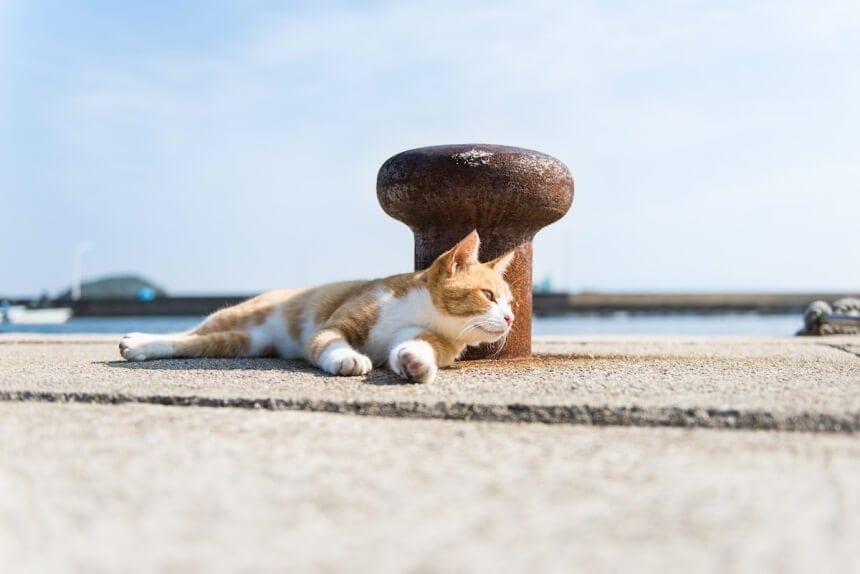andrew marttila cats island japan 7