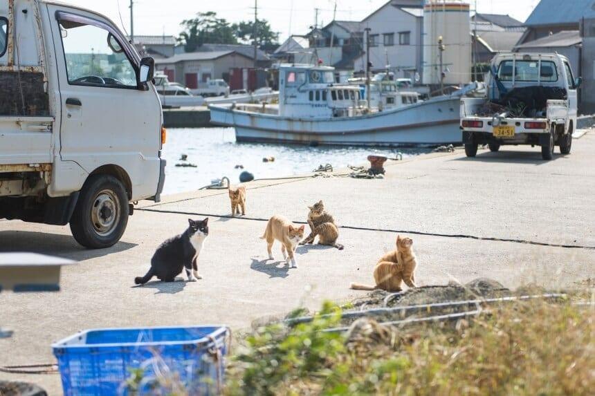 andrew marttila cats island japan 8