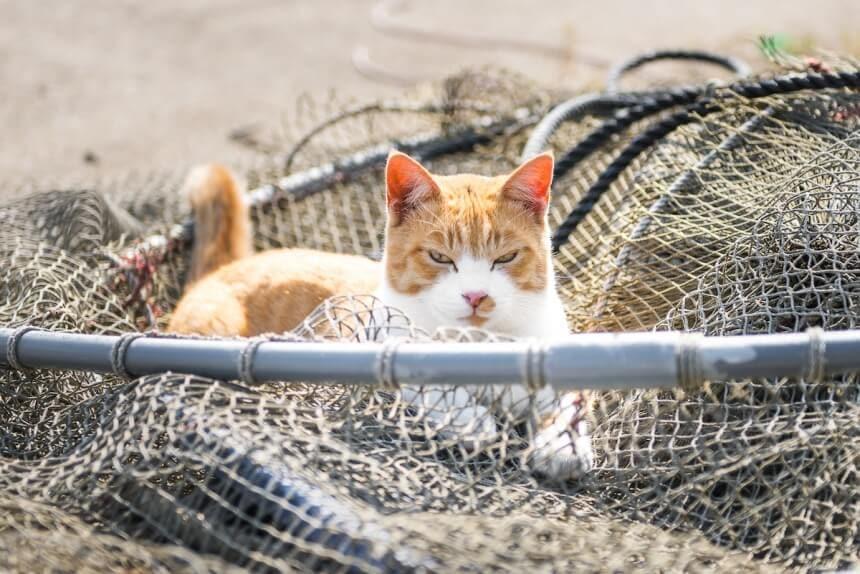 andrew marttila cats island japan 9