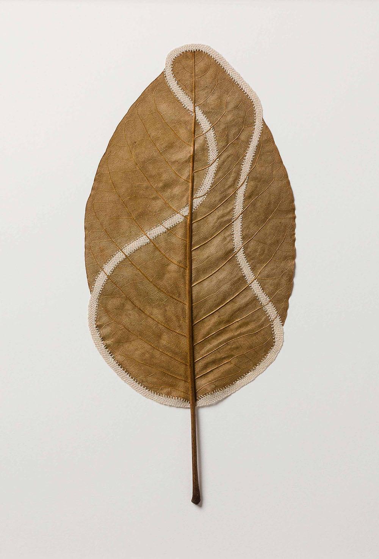 dried leaves usanna bauer 1