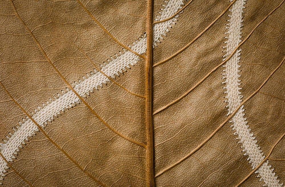 dried leaves usanna bauer 2