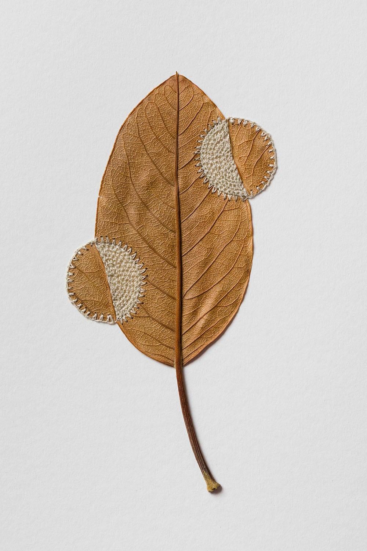dried leaves usanna bauer 6