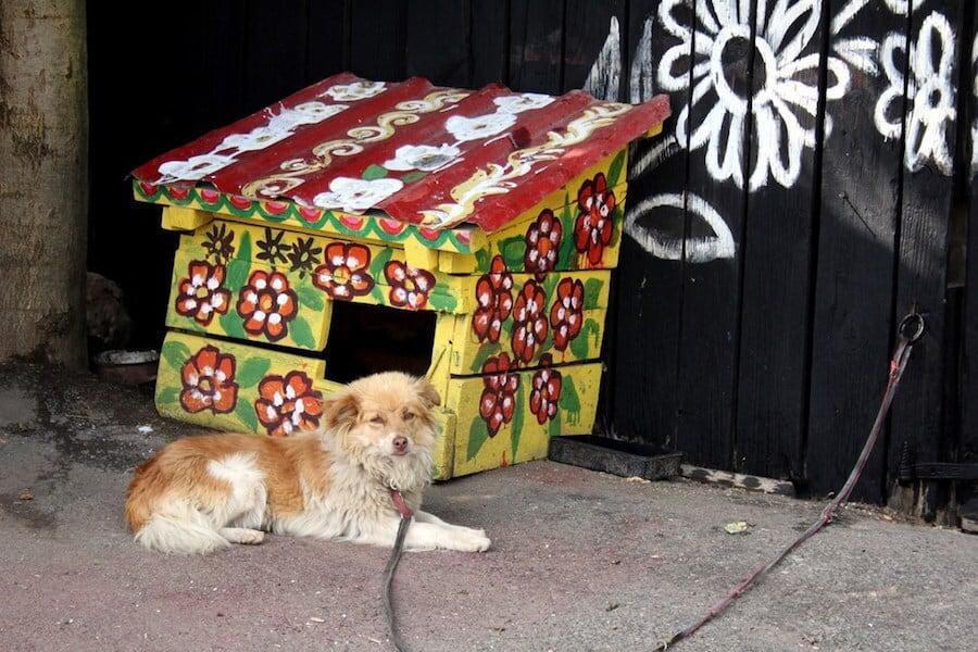 zalipie poland painted village fy 11