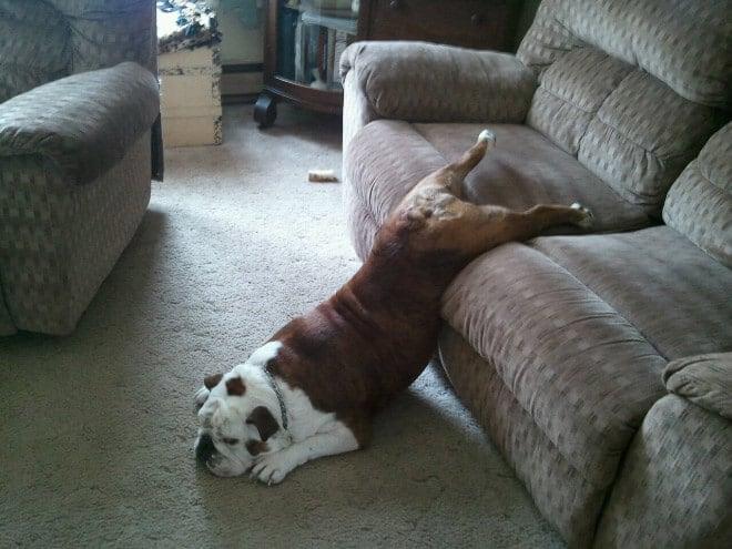 adorable photos pets struggling understand furniture fy 10